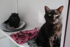 Alfie and Oscar
