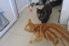 Iris and Loki