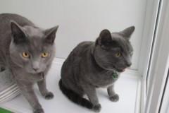 Jasper and  Monty